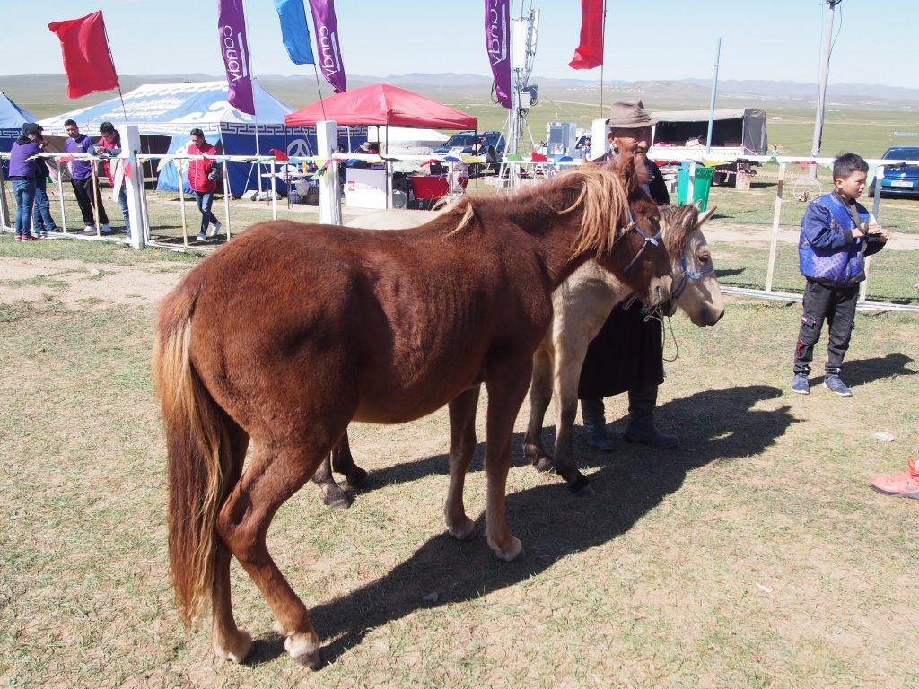 モンゴル国際草原マラソン優勝賞品の馬